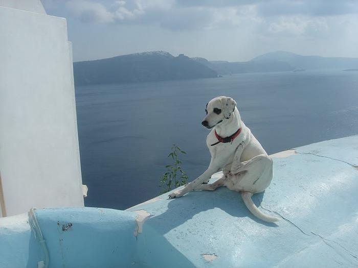 домашниe животные на острове Санторин 59575