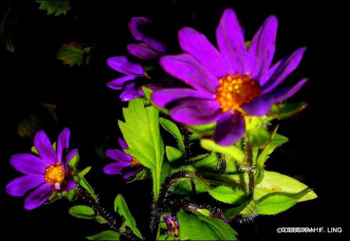 Фотографии от Deborah F. Ling 64619