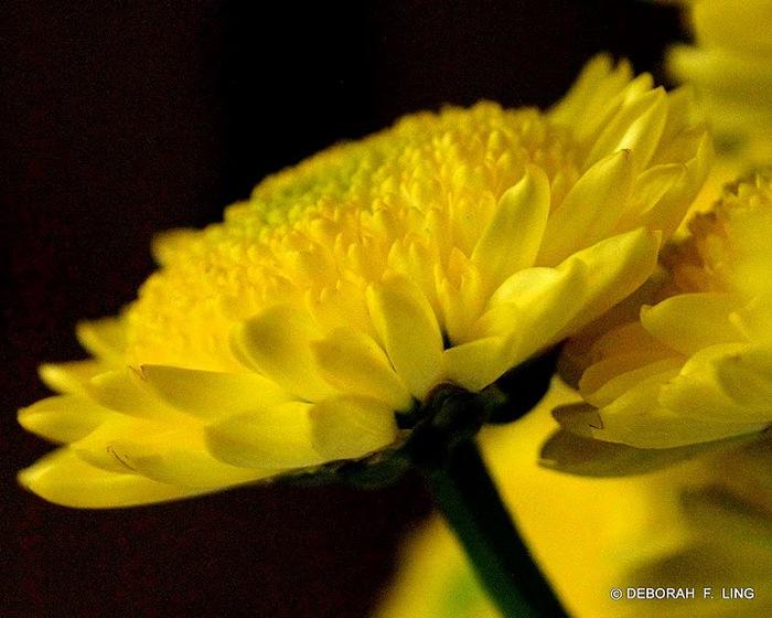 Фотографии от Deborah F. Ling 14395