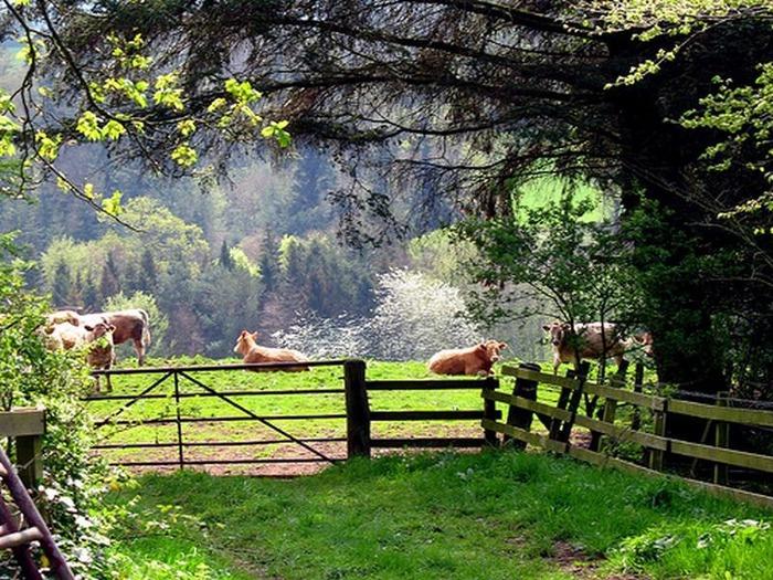 весенние пейзажи 10