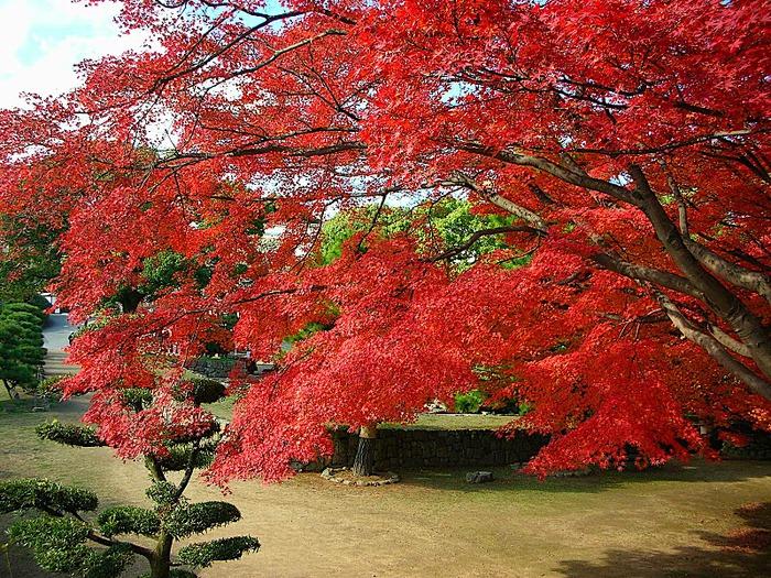 Замок Химедзи - Himeji Castle 36909