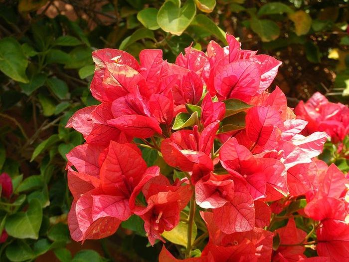 цветочный хоровод 70844