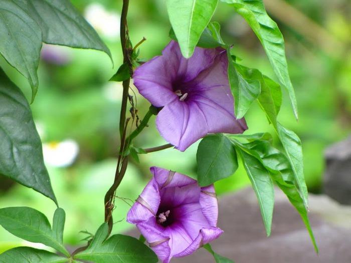 цветочный хоровод 55572