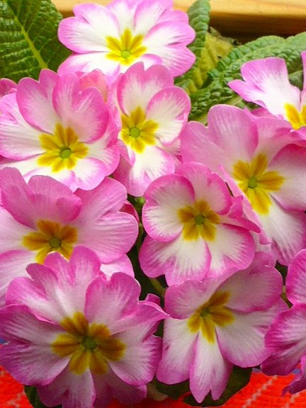 цветочный хоровод 17592