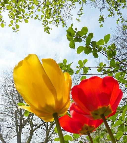 цветочный хоровод 71295