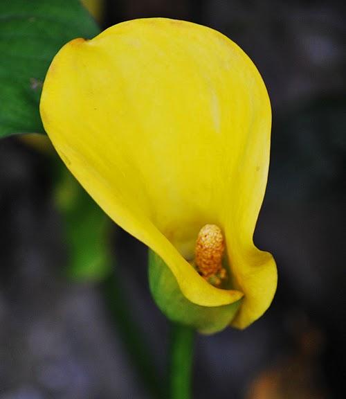 цветочный хоровод 84209
