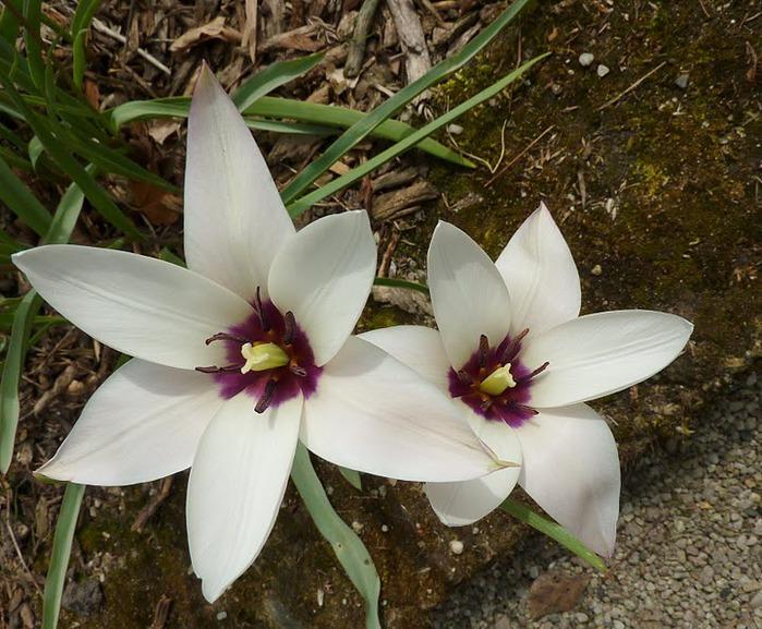 цветочный хоровод 81044