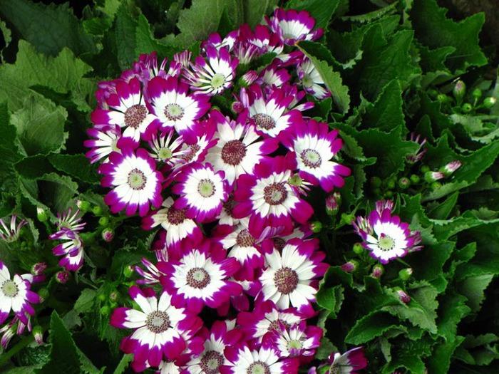 цветочный хоровод 38097