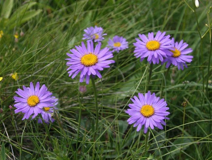 цветочный хоровод 45961