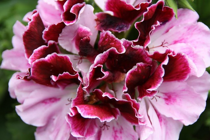 цветочный хоровод 24781