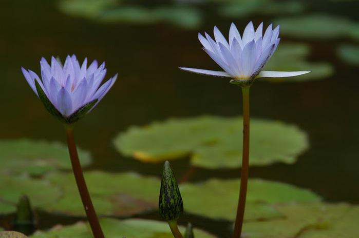 цветочный хоровод 99550