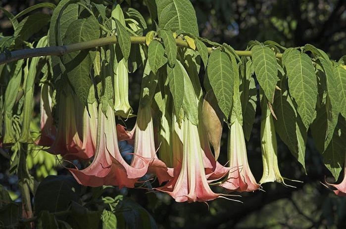 цветочный хоровод 47592