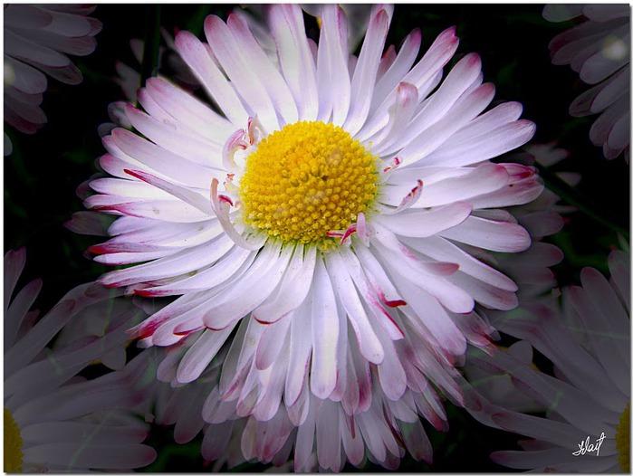 цветочный хоровод 84619