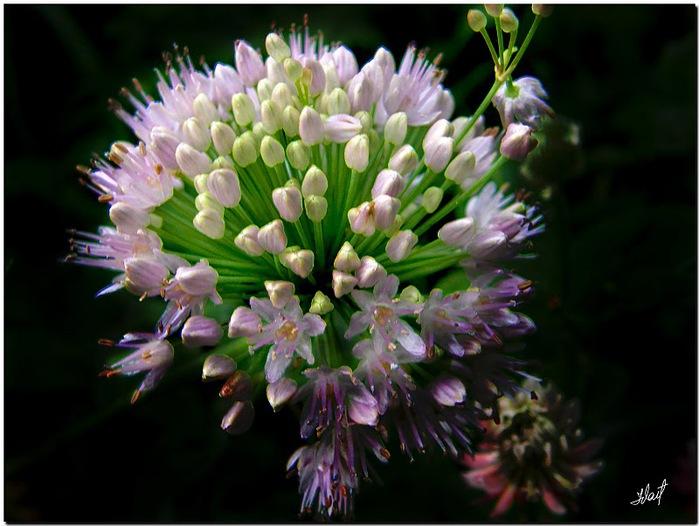 цветочный хоровод 62776