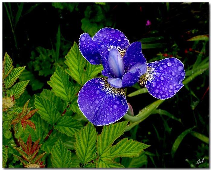 цветочный хоровод 87287