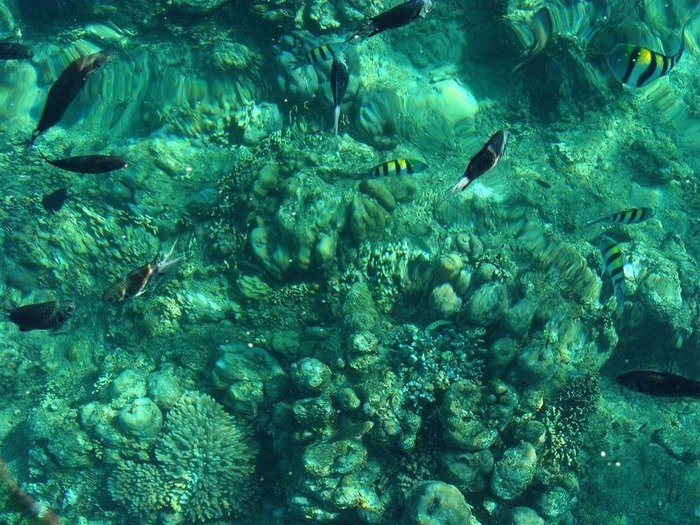 Фотопутешествие по Бали 42