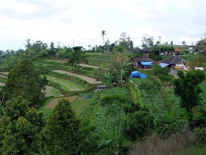 Фотопутешествие по Бали 56