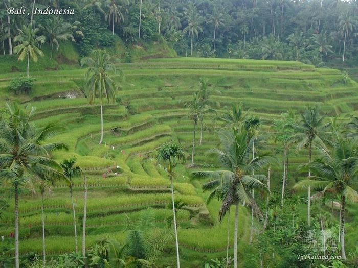 Фотопутешествие по Бали 78