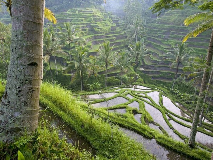 Фотопутешествие по Бали 91