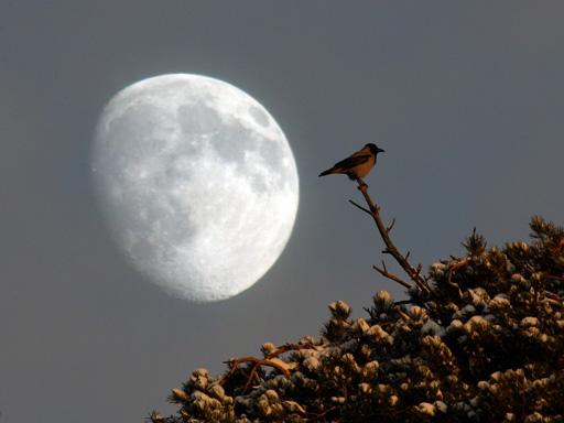 Лунный перигей вызвал землетрясение и цунами в Японии?