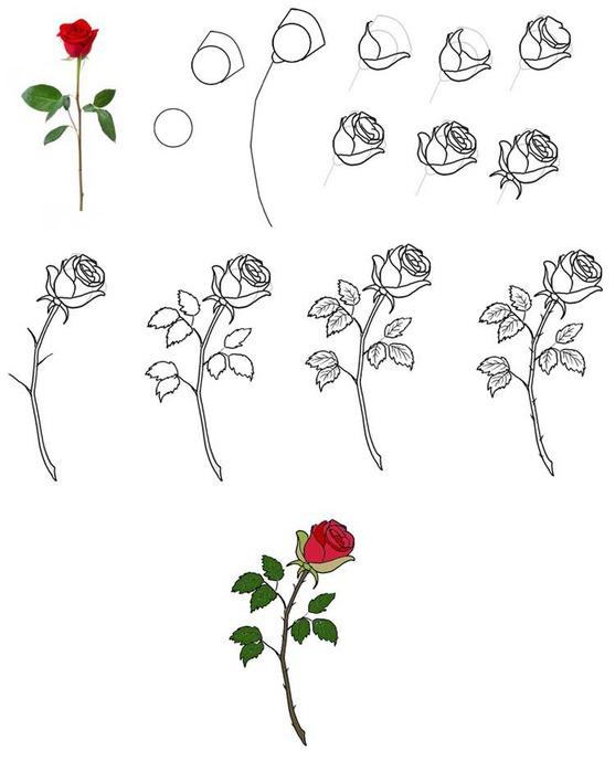 Легко рисуем любой цветок: МАК