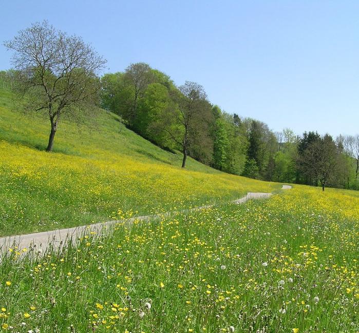 http://img0.liveinternet.ru/images/attach/c/2//71/986/71986101_42033459_spring_meadow.jpg