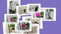 Рождение орхидеи (часть I)