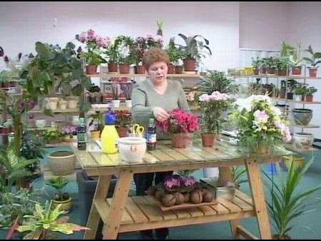 комнатные растения полив пересадка уход