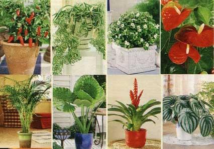 комнатные растения 33 полезных совета