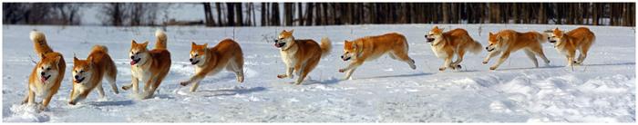 последний снег, игры собаки
