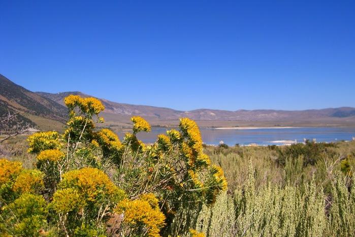 Озеро Моно - Mono Lake, 95412