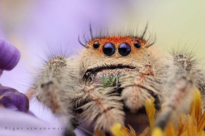 красивые фото насекомых крупным планом Хьюго Пьюго
