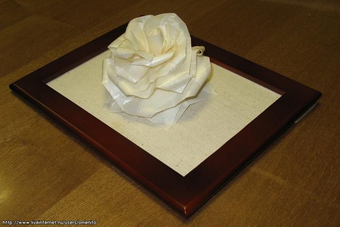 Изображение: Белая роза Ланга