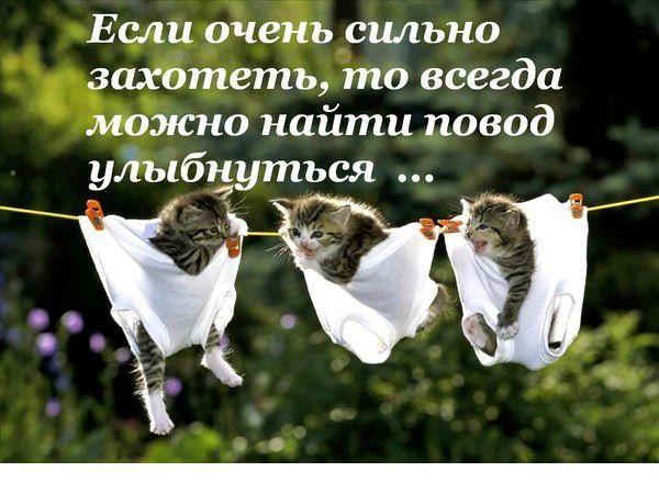 72778051_img_40085476_3659_1 (600x450, 56 Kb)