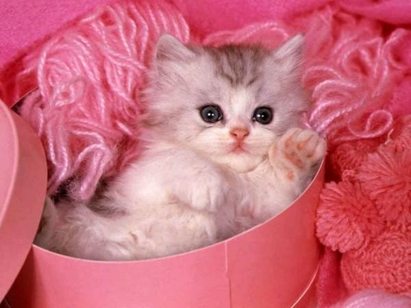 Animals_Cats__002010_7[1] (600x450, 62 Kb)