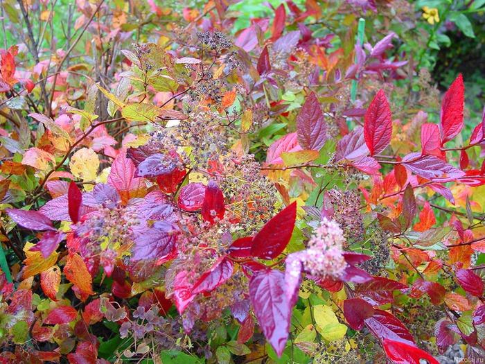 Скачать фото - Осенние листья на деревьях Осенний сад. Цикл Краски