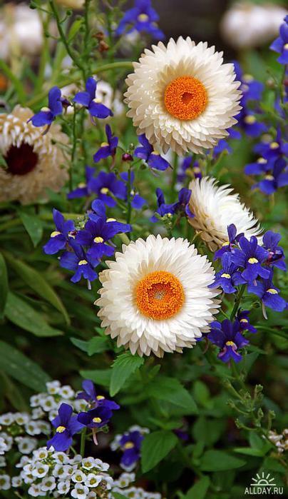 Цветок в вазоне своими руками
