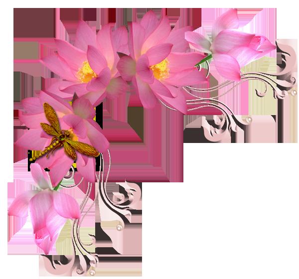 картинки цветы в пнг на прозрачном фоне