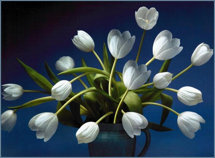 http://img0.liveinternet.ru/images/attach/c/2/64/69/64069413_63353713_36476786_pa_SimonKayne_BeautifulFlorals_10.jpg