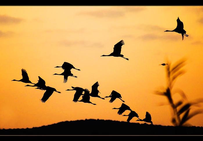 ...alt='Снова птицы в стаи собираются' style='display:block;float:none; padding-bottom.