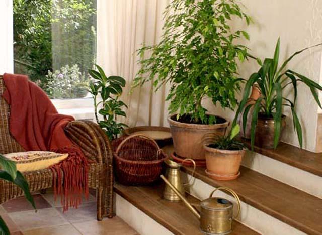 Комнатные растения в интерьере дома. интерьер дома.