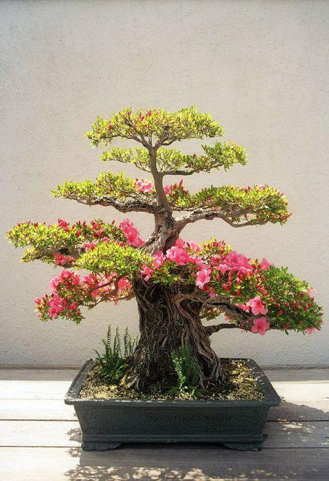 Цветы в виде дерева