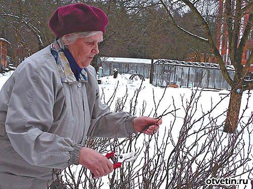 Обрезаем ягодные кустарники.