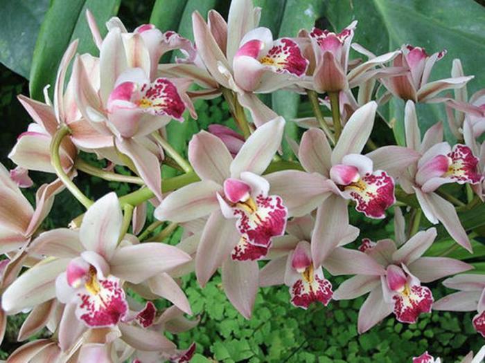 Цветы в ашане католог мошки в