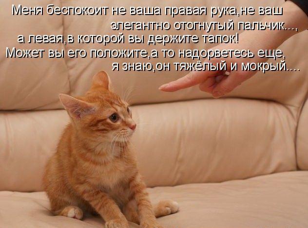 У кошек отсутствуют нормальные ключицы
