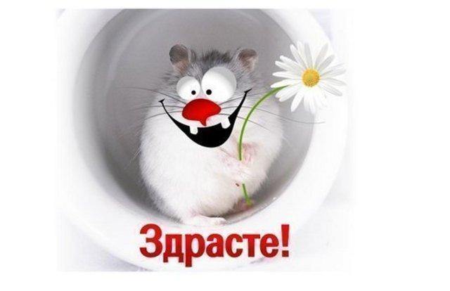 http://img0.liveinternet.ru/images/attach/c/2/66/777/66777961_Privet.jpg