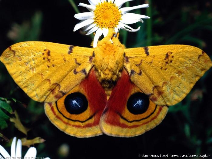 Делаем бабочек в технике пергамано