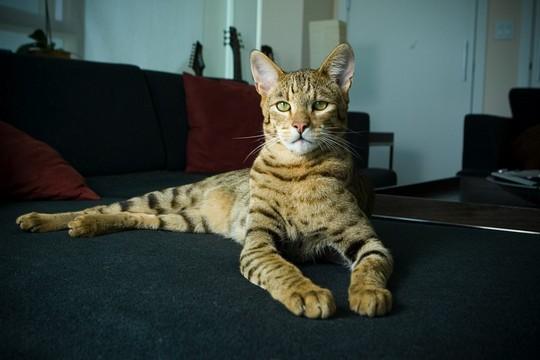 Кот, Котэ, прикольная картинка с котами.