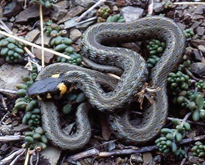 вышивка крестом год змеи