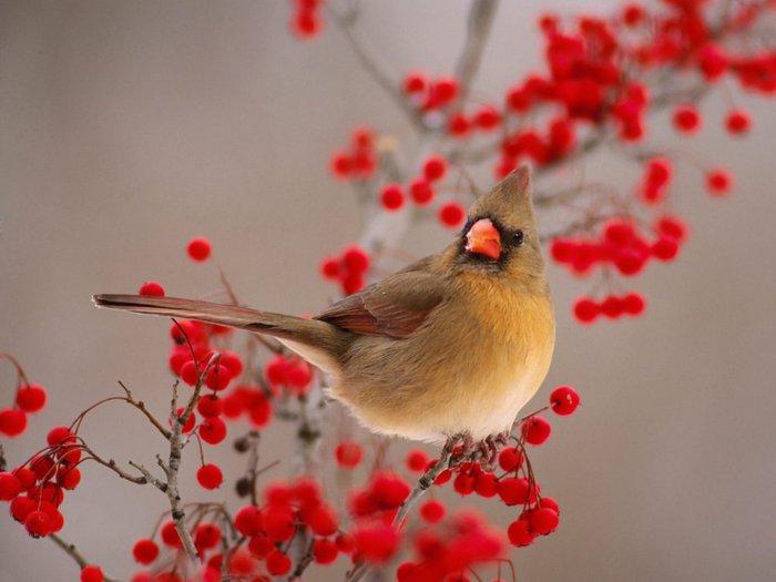 bepa написал: Вот такая птичка... не воробушек и не синичка.